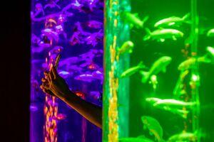 عکس/ نمایش متفاوت هزاران ماهی قرمز در ژاپن