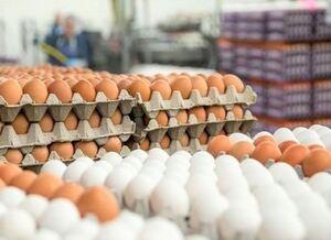 فیلم/ گزارشی از بازار آشفته تخم مرغ
