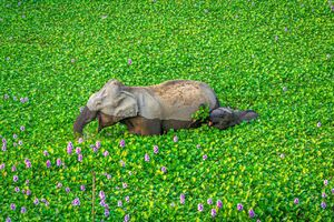 تصویری زیبا از پارک ملی کازیرانگا در هند