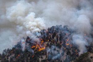 بحران آتش سوزی در آمریکا