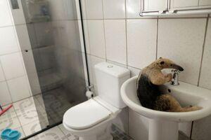 عکس/ وضعیت حیوانات پس از آتش سوزی در آمازون