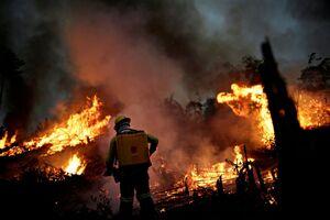 وضعیت حیوانات پس از آتش سوزی در آمازون