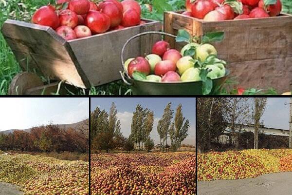 سهم ناچیز ایران از بازار سیب