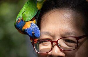 عکس/ درگیری طوطی با عینک