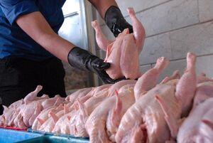 قیمت مرغ در بازار به ۱۸ هزار تومان رسید