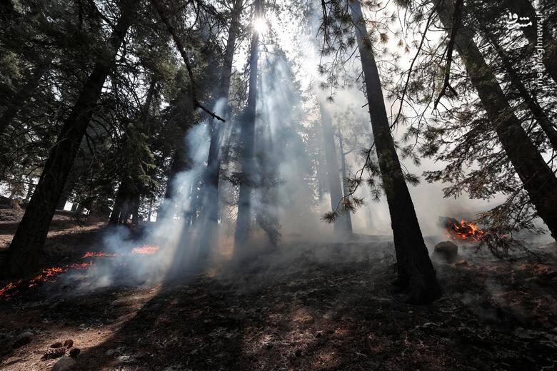 2920414 - عکس/ نابودی بیسابقه جنگلهای کالیفرنیا در حریق
