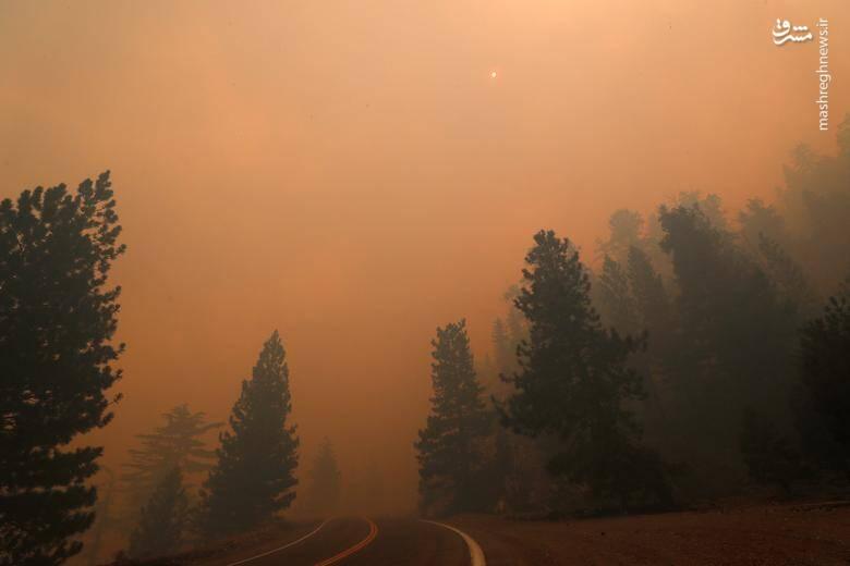 2920416 - عکس/ نابودی بیسابقه جنگلهای کالیفرنیا در حریق