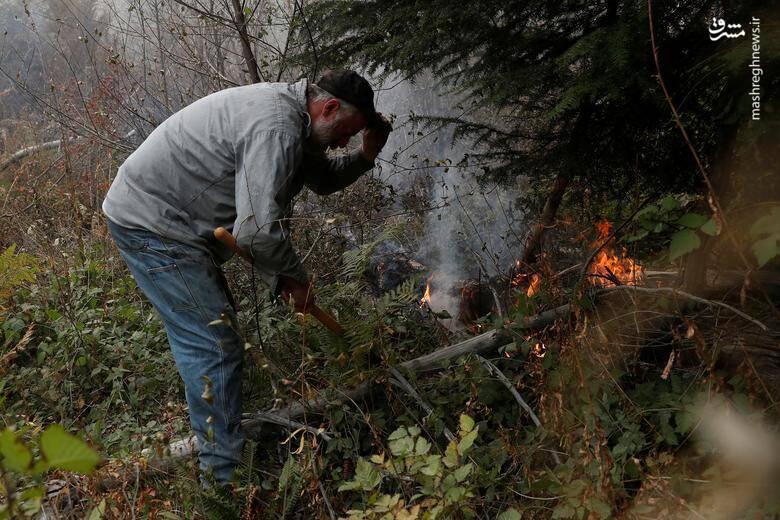 2920417 - عکس/ نابودی بیسابقه جنگلهای کالیفرنیا در حریق