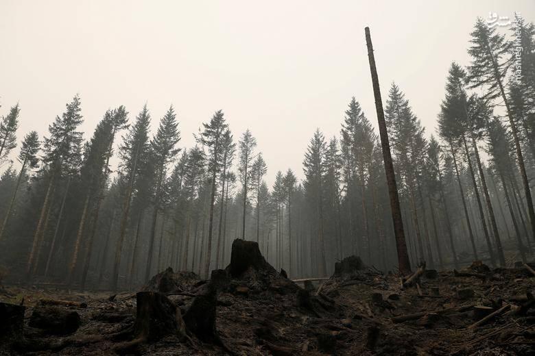 2920418 - عکس/ نابودی بیسابقه جنگلهای کالیفرنیا در حریق