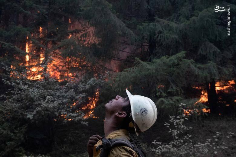 2920419 - عکس/ نابودی بیسابقه جنگلهای کالیفرنیا در حریق