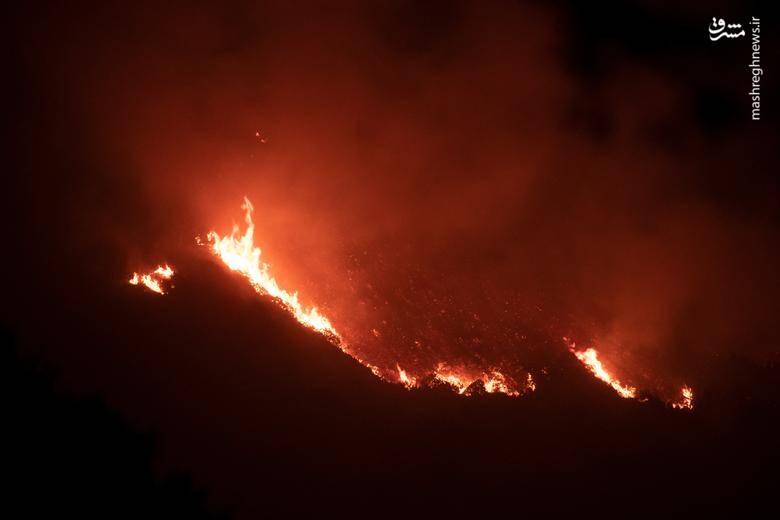 2920421 - عکس/ نابودی بیسابقه جنگلهای کالیفرنیا در حریق