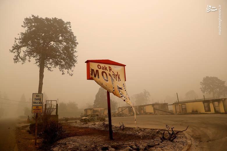 2920424 - عکس/ نابودی بیسابقه جنگلهای کالیفرنیا در حریق