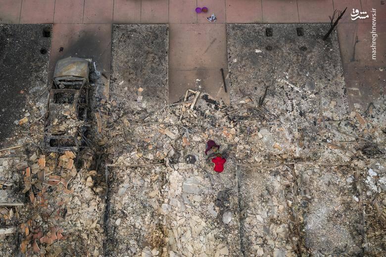 2920426 - عکس/ نابودی بیسابقه جنگلهای کالیفرنیا در حریق