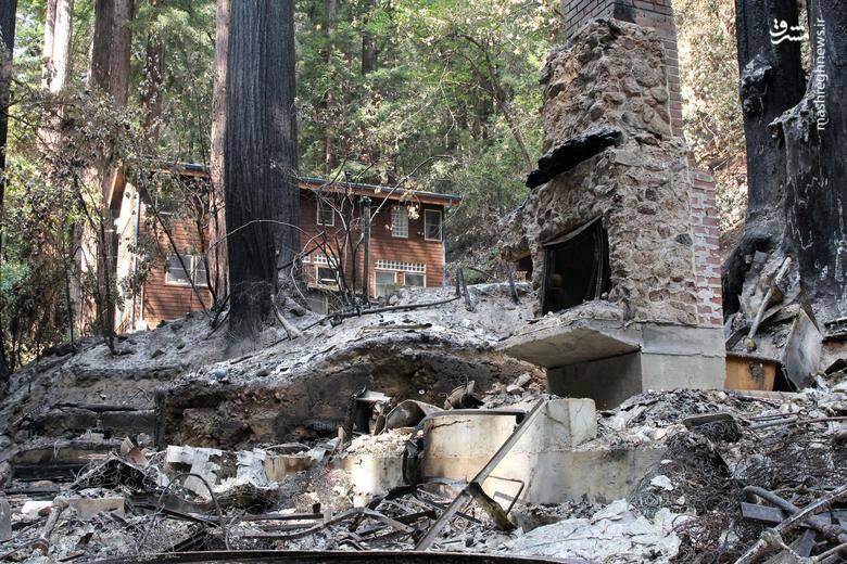 2920427 - عکس/ نابودی بیسابقه جنگلهای کالیفرنیا در حریق