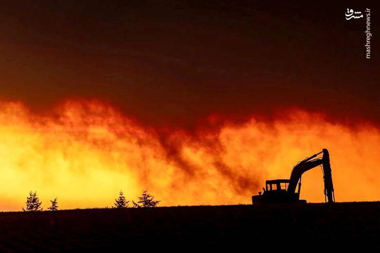 2920428 - عکس/ نابودی بیسابقه جنگلهای کالیفرنیا در حریق