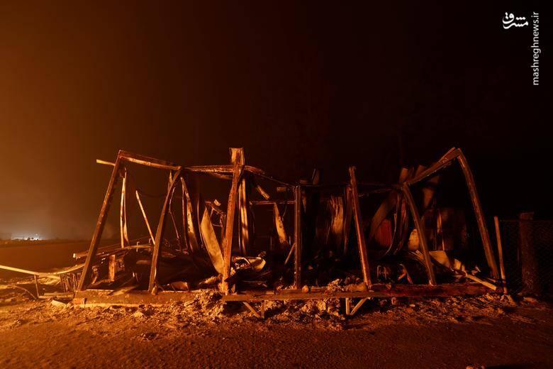 2920429 - عکس/ نابودی بیسابقه جنگلهای کالیفرنیا در حریق