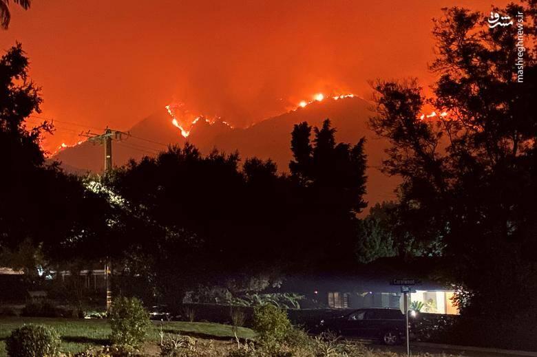 2920432 - عکس/ نابودی بیسابقه جنگلهای کالیفرنیا در حریق