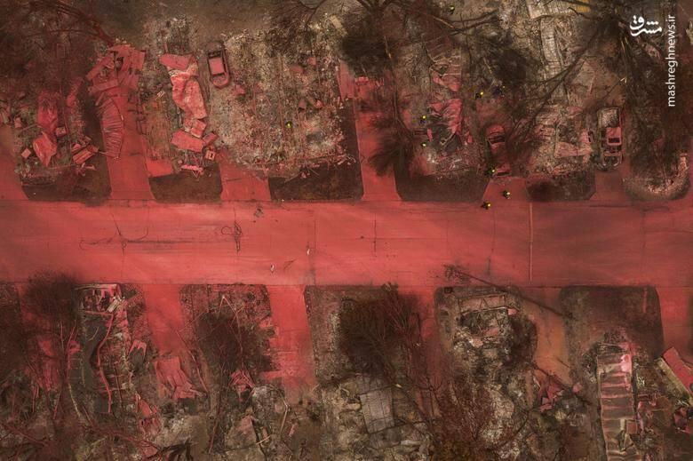 2920433 - عکس/ نابودی بیسابقه جنگلهای کالیفرنیا در حریق