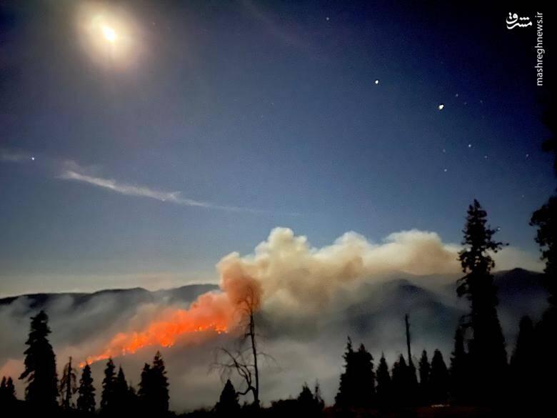 2920434 - عکس/ نابودی بیسابقه جنگلهای کالیفرنیا در حریق