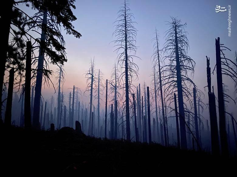 2920435 - عکس/ نابودی بیسابقه جنگلهای کالیفرنیا در حریق