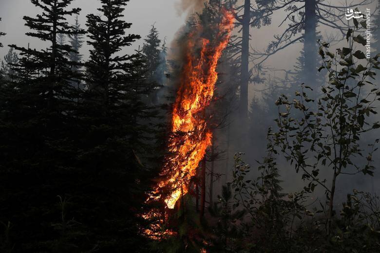 2920437 - عکس/ نابودی بیسابقه جنگلهای کالیفرنیا در حریق