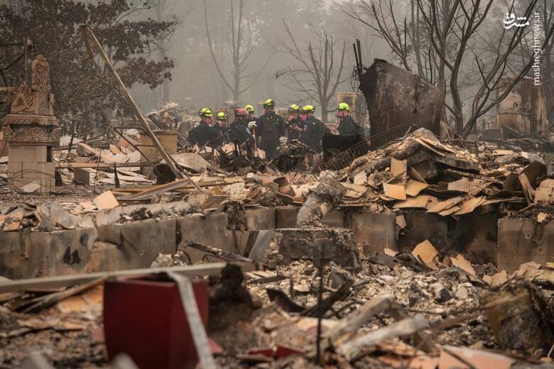 2920438 - عکس/ نابودی بیسابقه جنگلهای کالیفرنیا در حریق