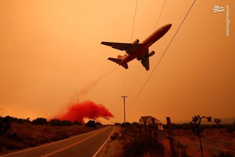 2920440 - عکس/ نابودی بیسابقه جنگلهای کالیفرنیا در حریق