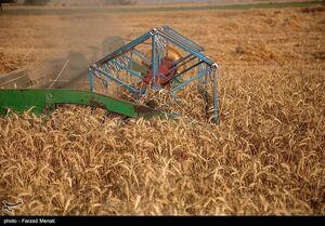 دولت با تعیین نرخ ناعادلانه خودکفایی گندم را از بین نبرد
