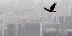 آلودگی هوا تا چه اندازه میتواند آمار تلفات کرونا را بالا ببرد؟