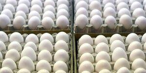 تصمیم گیری برای تولید تخم مرغ توسط 4 نهاد دولتی