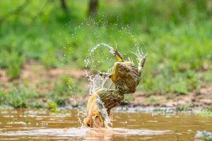عکس/ فنون کُشتی در حیات وحش