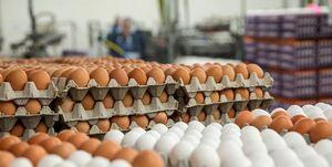صادرات تخم مرغ منوط به مجوز وزارت کشاورزی شد+ سند