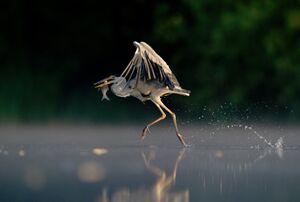 دهمین دوره جایزه عکاسی از حیات وحش انگلیس