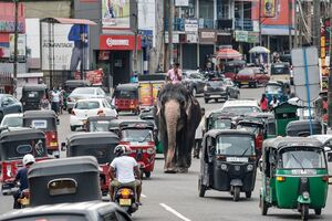 عکس/ قدم زدن فیل در ترافیک