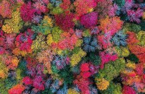 عکس/ بازی رنگها در پاییز