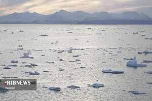 عکس/ گرمایش زمین و آب شدن یخهای قطبی