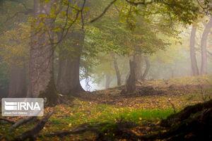 عکس/ پاییز در جهان نما