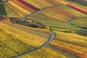برگهای سرخ و زرد فصل پاییز