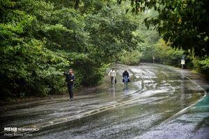 عکس/ باران پاییزی در جنگل های هیرکانی
