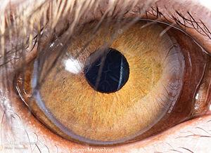 عکس/ چشم در چشم با حیوانات
