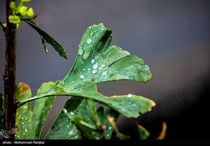 عکس/ باران پاییزی در گیلان