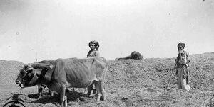 خبرچین BBC فارسی چه هدفی از اصلاحات ارضی داشت؟