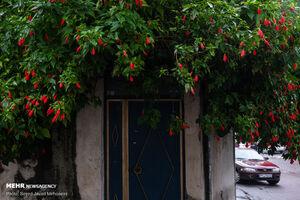 عکس/ حال و هوای رشت با باران پاییزی