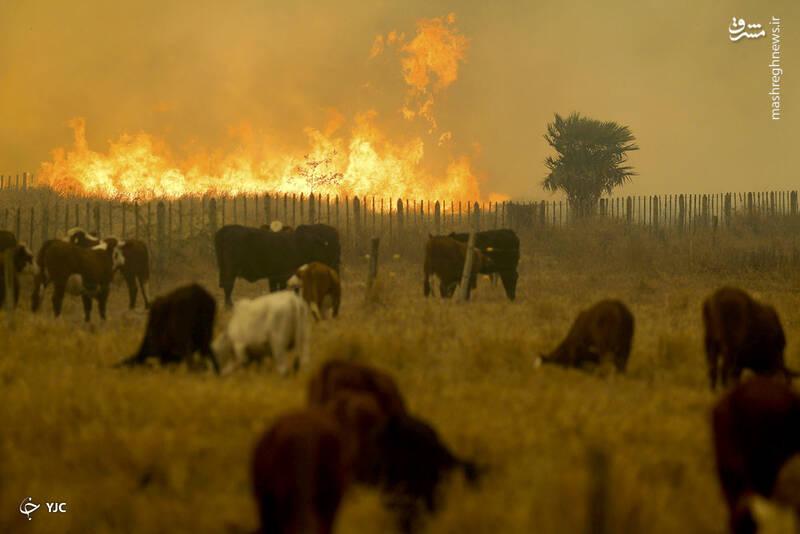 آتش سوزی در منطقه Chaco، در Estancia Cuatro Ciervos ، پاراگوئه