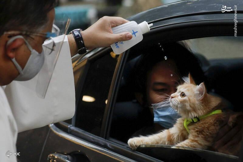 یک کشیش کاتولیک در روز جهانی حیوانات، در مرکز خرید ایستوود، شهر کوزون ، فیلیپین بر روی یک گربه آب مقدس را می پاشد