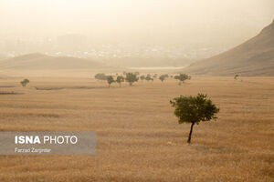 عکس/ «گردو» دره بلاتکلیف اراک