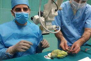 برای اولین بار در دنیا صورت گرفت/ عمل جراحی آب مروارید چشم سنجاب و طوطی در تبریز+ تصاویر - کراپشده
