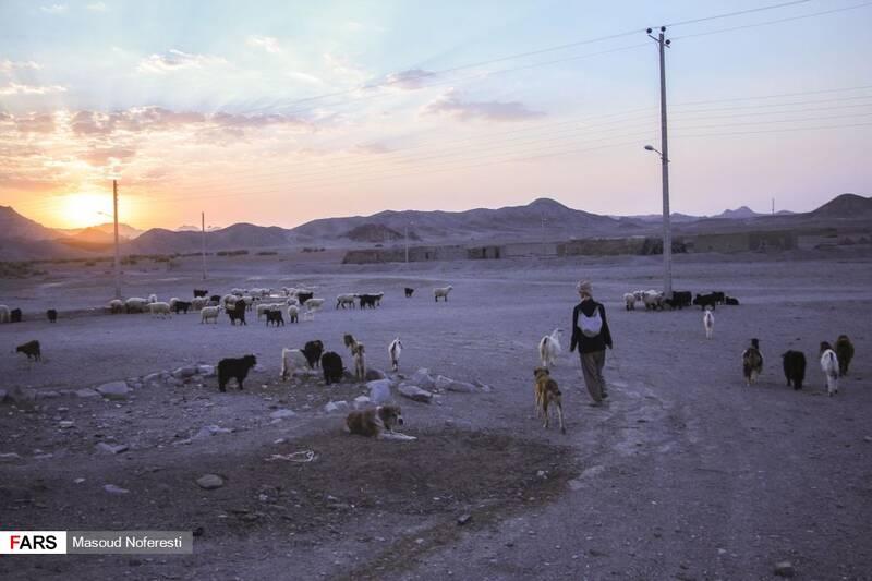 چوپان اهل روستا که همزمان با طلوع آفتاب راهی صحرا میشود.