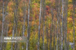 رنگ آمیزی پاییز در «پرور» سمنان