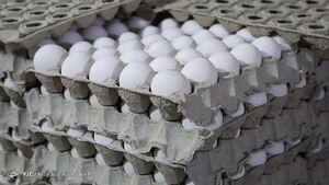 کاهش تولید دلیل گرانی تخم مرغ است